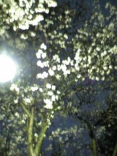 夜桜。.jpg